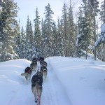 Mushing on the Livingston Trail